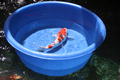 Matala Koi Viewing Bowl 26.6